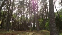 Lote bien forestado :: Mar de las pampas :: Fabián Estanga :: Negocios inmobiliarios